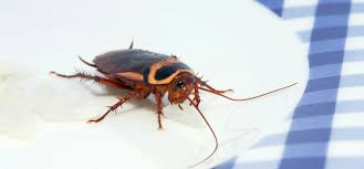 roaches infest home