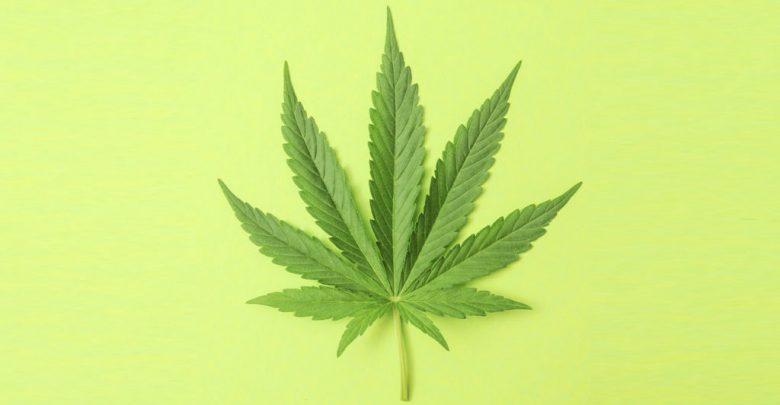 Medicinal Uses of Cannabis