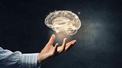 brain supplement costco